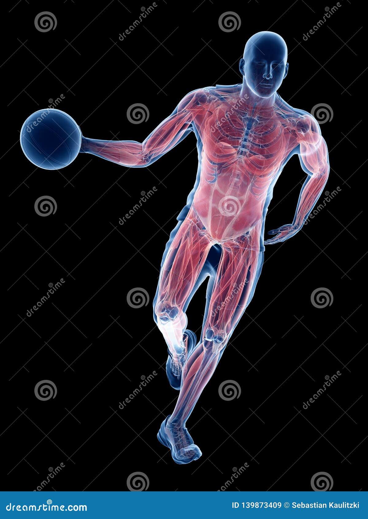 Músculos dos jogadores de basquetebol