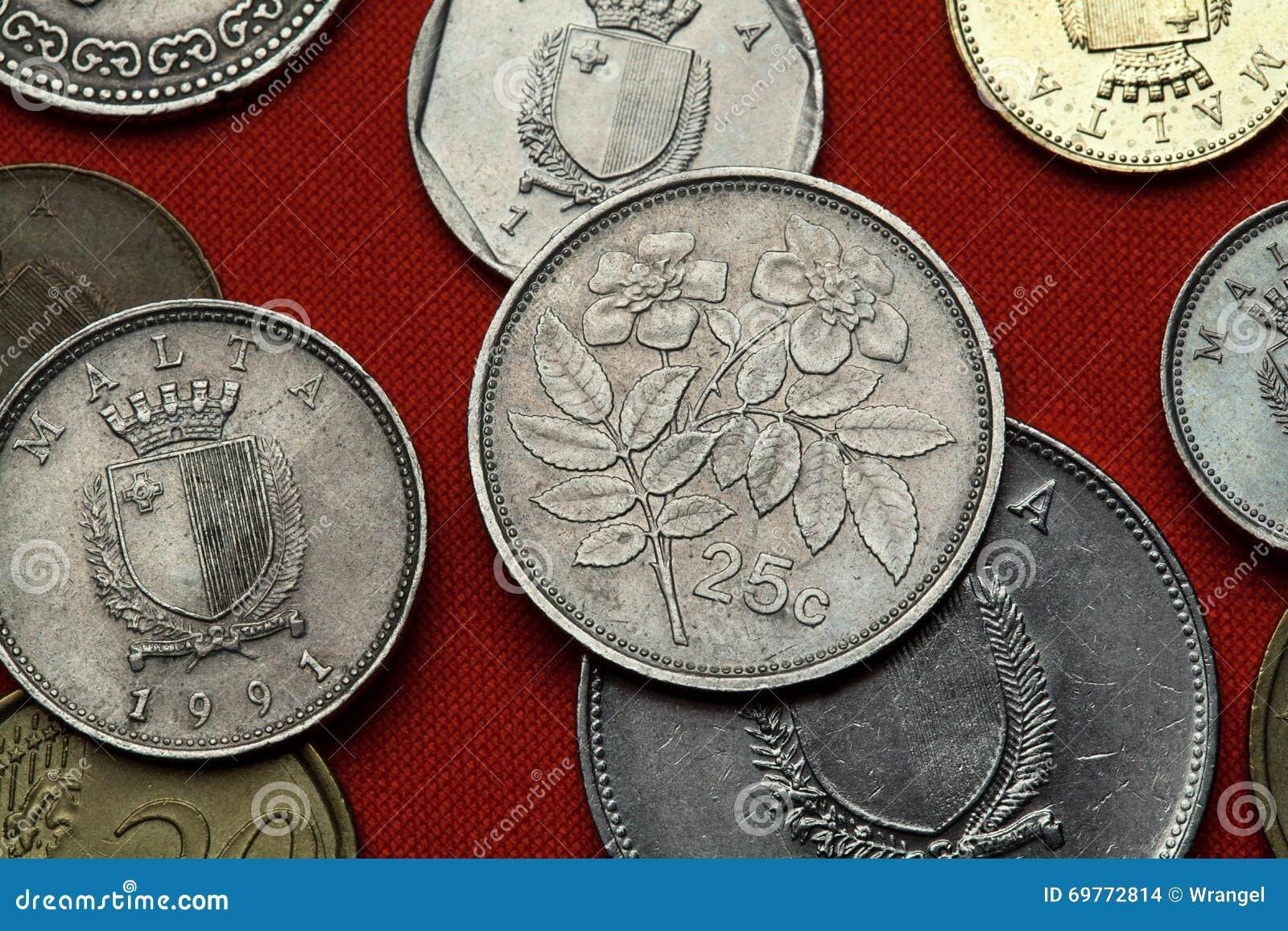 Münzen Von Malta Immergrün Stieg Rosa Sempervirens Stockfoto