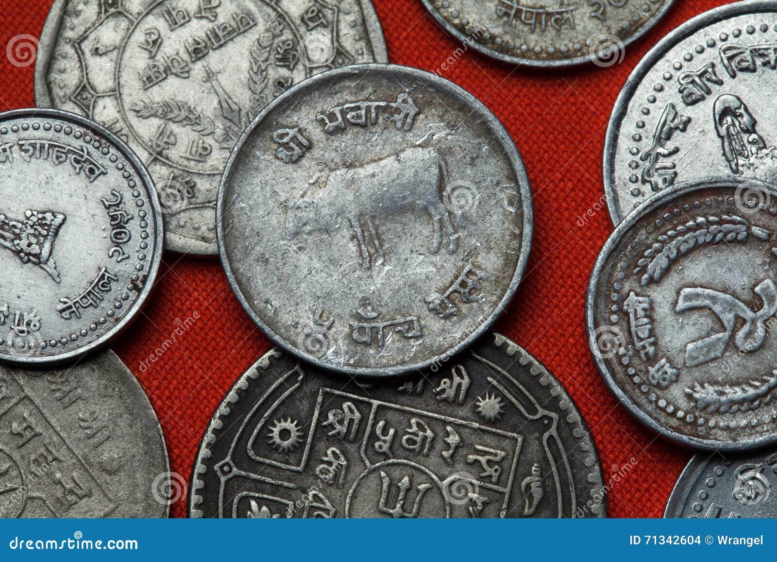 Münzen Von Nepal Hinduistische Heilige Kuh Stockfoto Bild Von