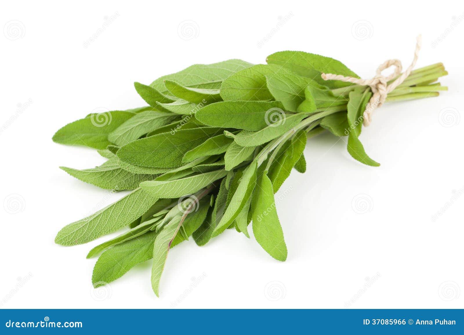 Download Mądra roślina zdjęcie stock. Obraz złożonej z kopiasty - 37085966