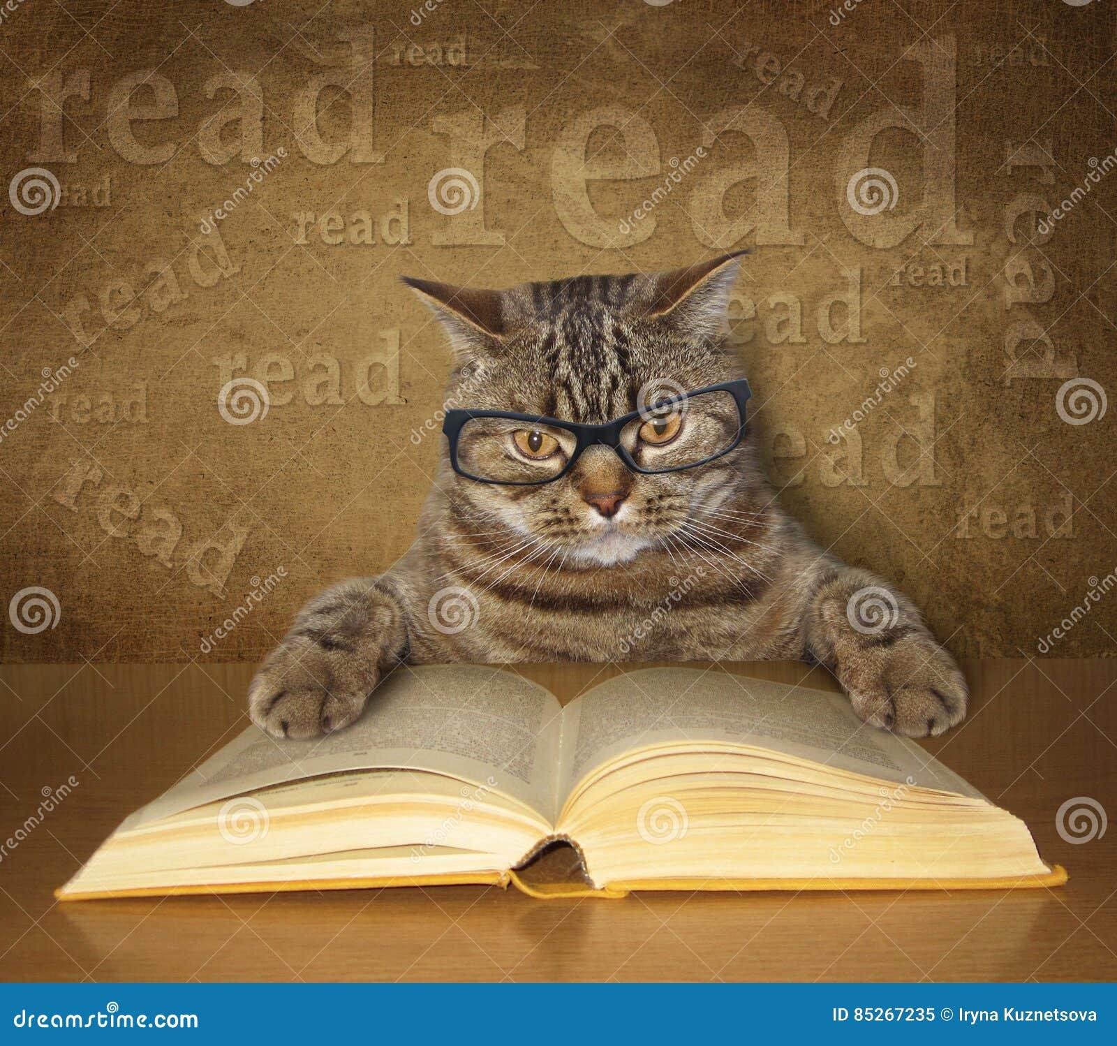 Mądry kot z szkłami czyta książkę