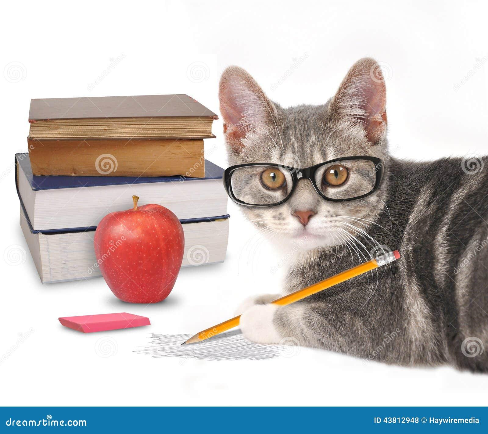 Mądrze kota Writing z książkami na bielu