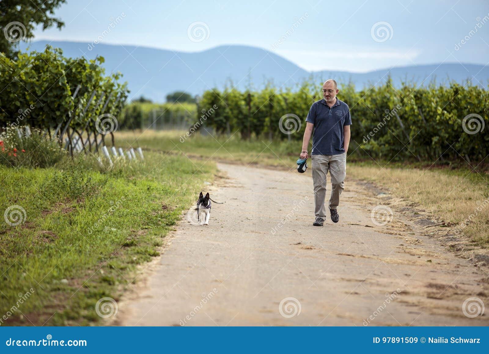 Mężczyzna odprowadzenia pies w winnicach