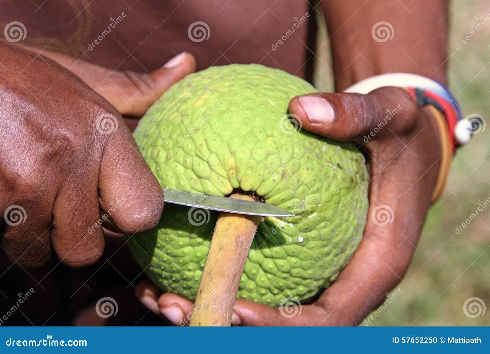 Mężczyzna otwiera breadfruit