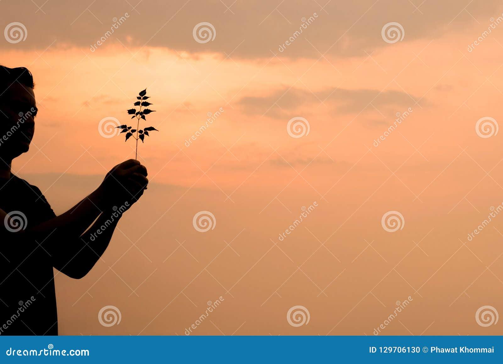 Mężczyzna sylwetka trzyma drzewa