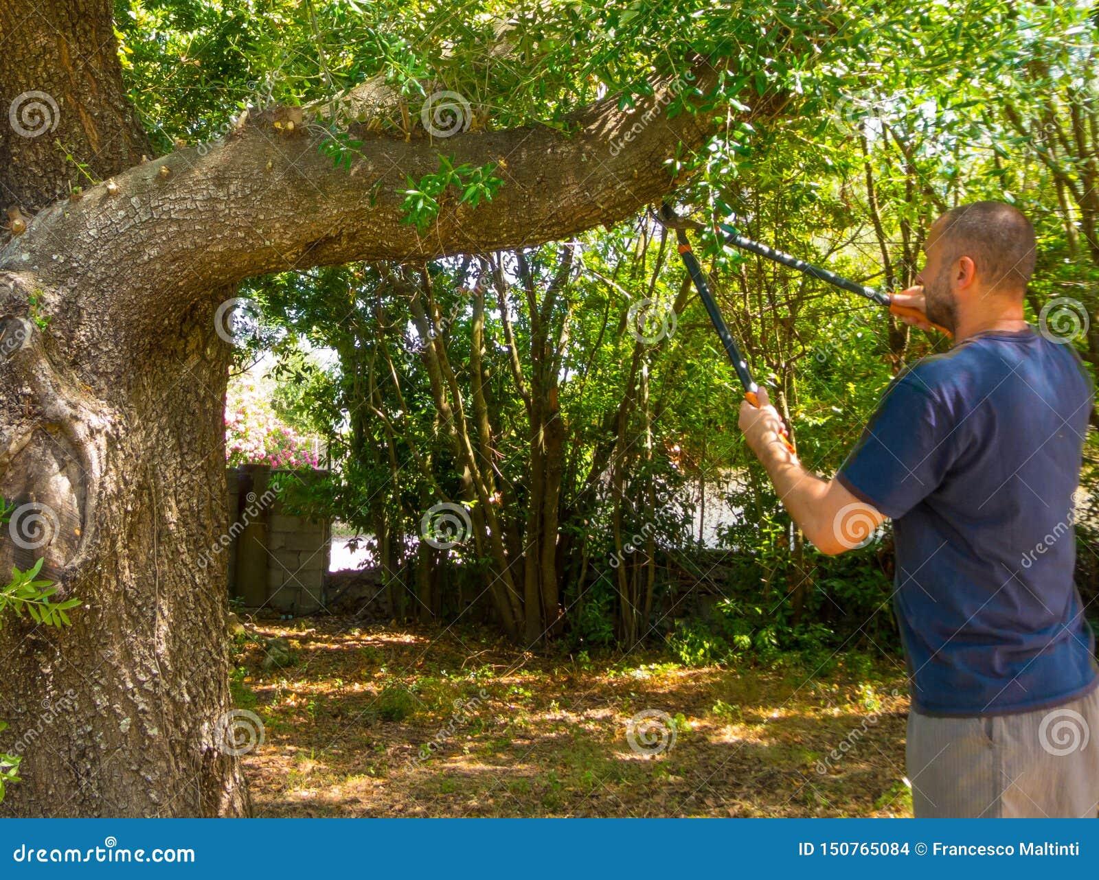 Mężczyzna używa strzyżenia w ogródzie