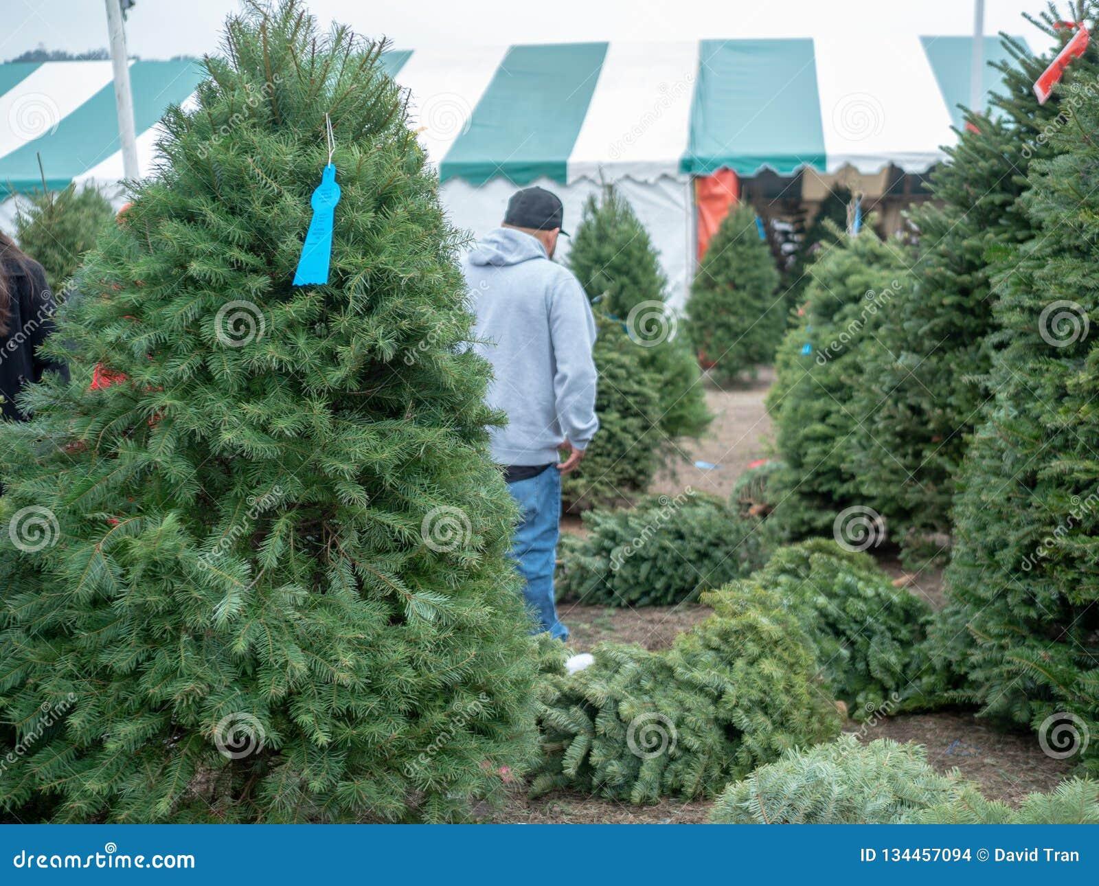 Mężczyzna w baseball nakrętce robi Bożenarodzeniowemu Xmas drzewnemu zakupy w drzewo rynku z Douglas jedlinowym drzewem wewnątrz
