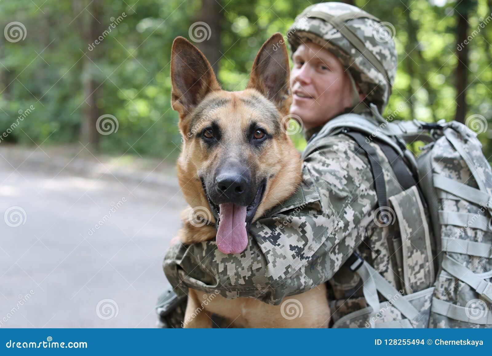 Mężczyzna w wojskowym uniformu z Niemieckim pasterskim psem