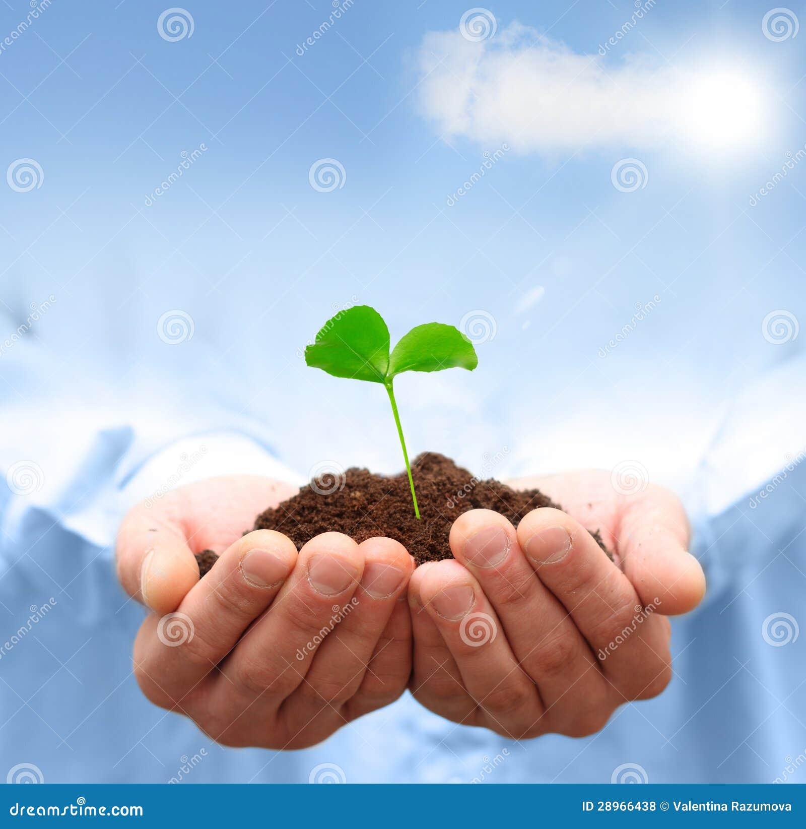 Mężczyzna wręcza trzymać zielonej rośliny.