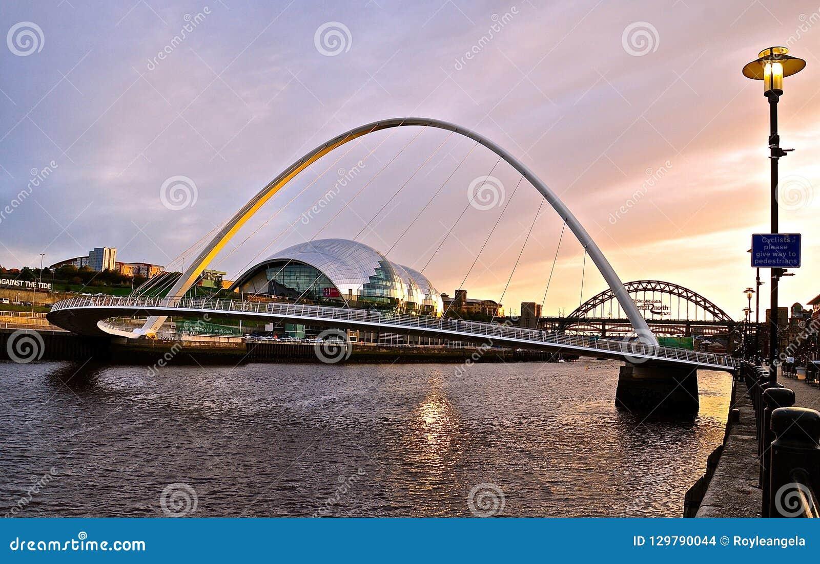 Mędrzec, Newcastle