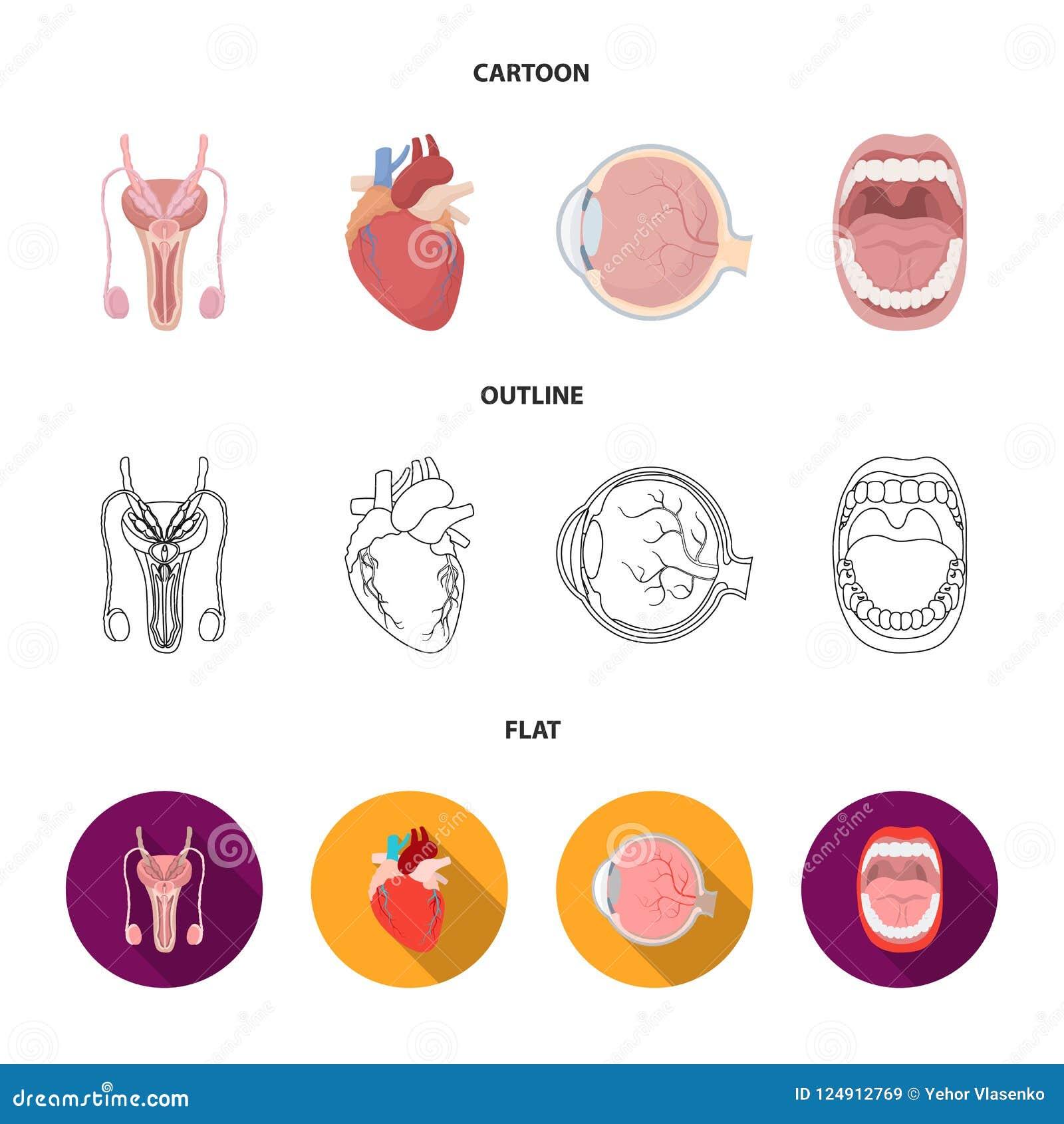 Męski system, serce, gałka oczna, oralny zagłębienie Organ ustawiać inkasowe ikony w kreskówce, kontur, mieszkanie symbolu stylow