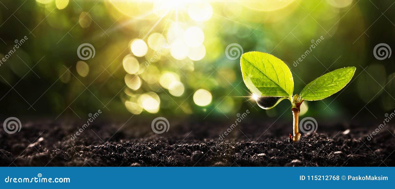 Młoda roślina w świetle słonecznym