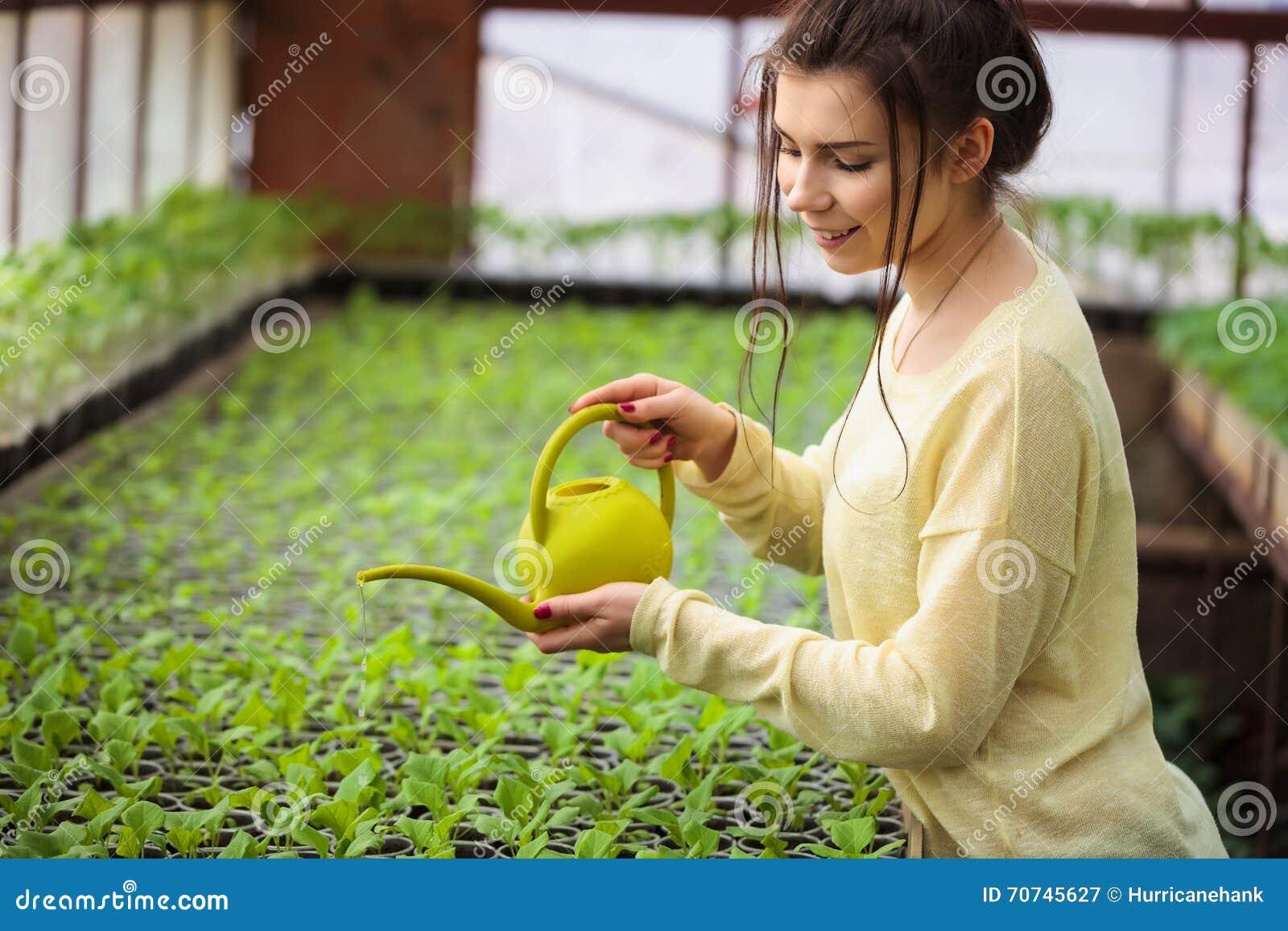 Młode średniorolne kobiety podlewania zieleni rozsady w szklarni