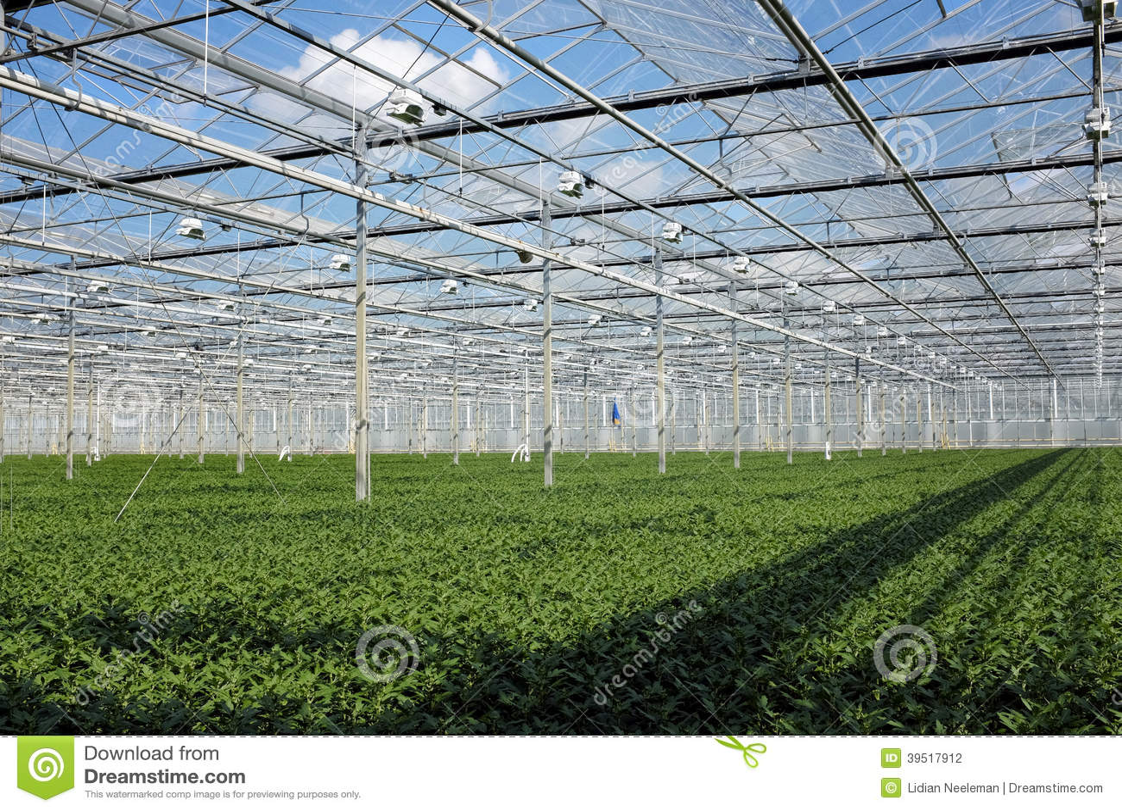 Młode rośliny w szklarni