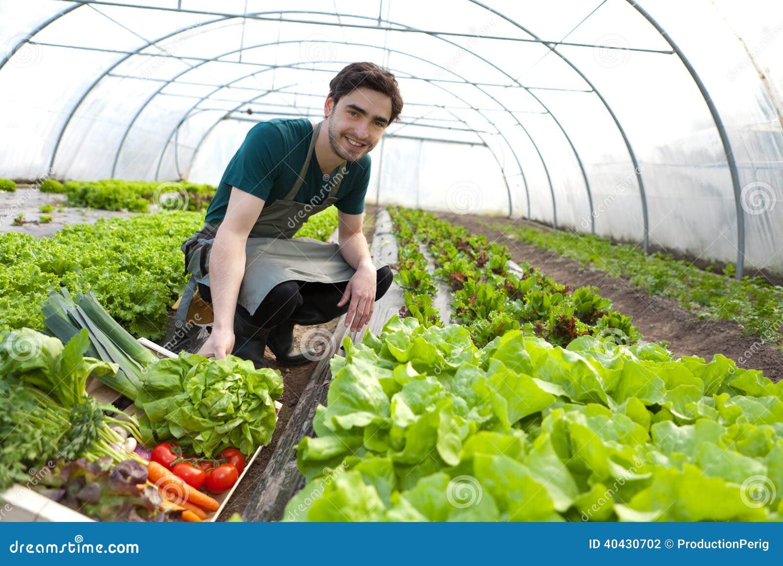 Młody atrakcyjny rolnik zbiera warzywa