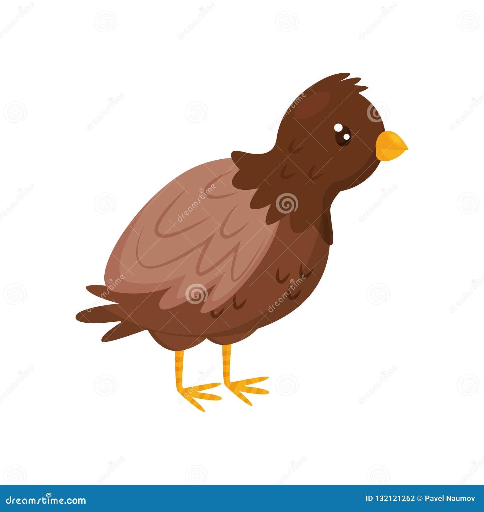 Młody brązu kurczak z pomarańczowym belfrem i nogami 7 zwierzęcia kreskówki gospodarstwa rolnego ilustraci serii ptactwo domowe P