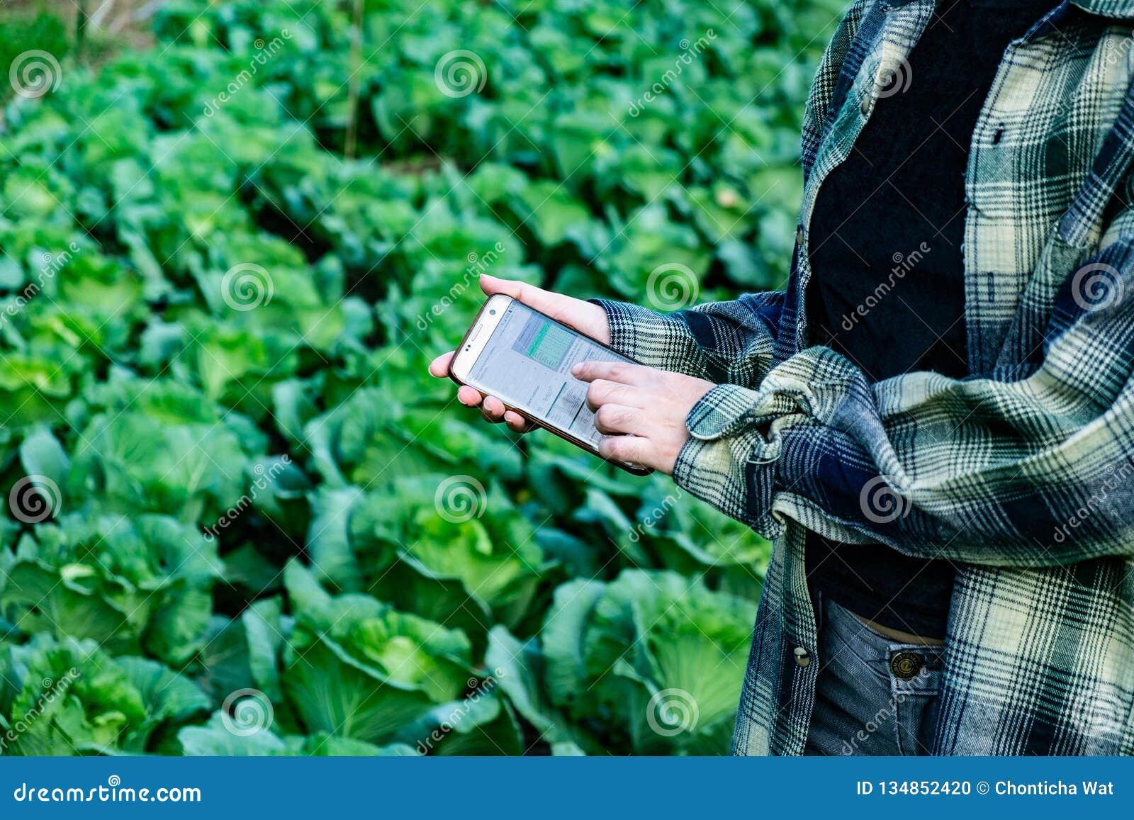 Młody rolnik obserwuje niektóre map warzywa segregującego w telefonie komórkowym, Eco organicznie mądrze gospodarstwo rolne 4 (0)