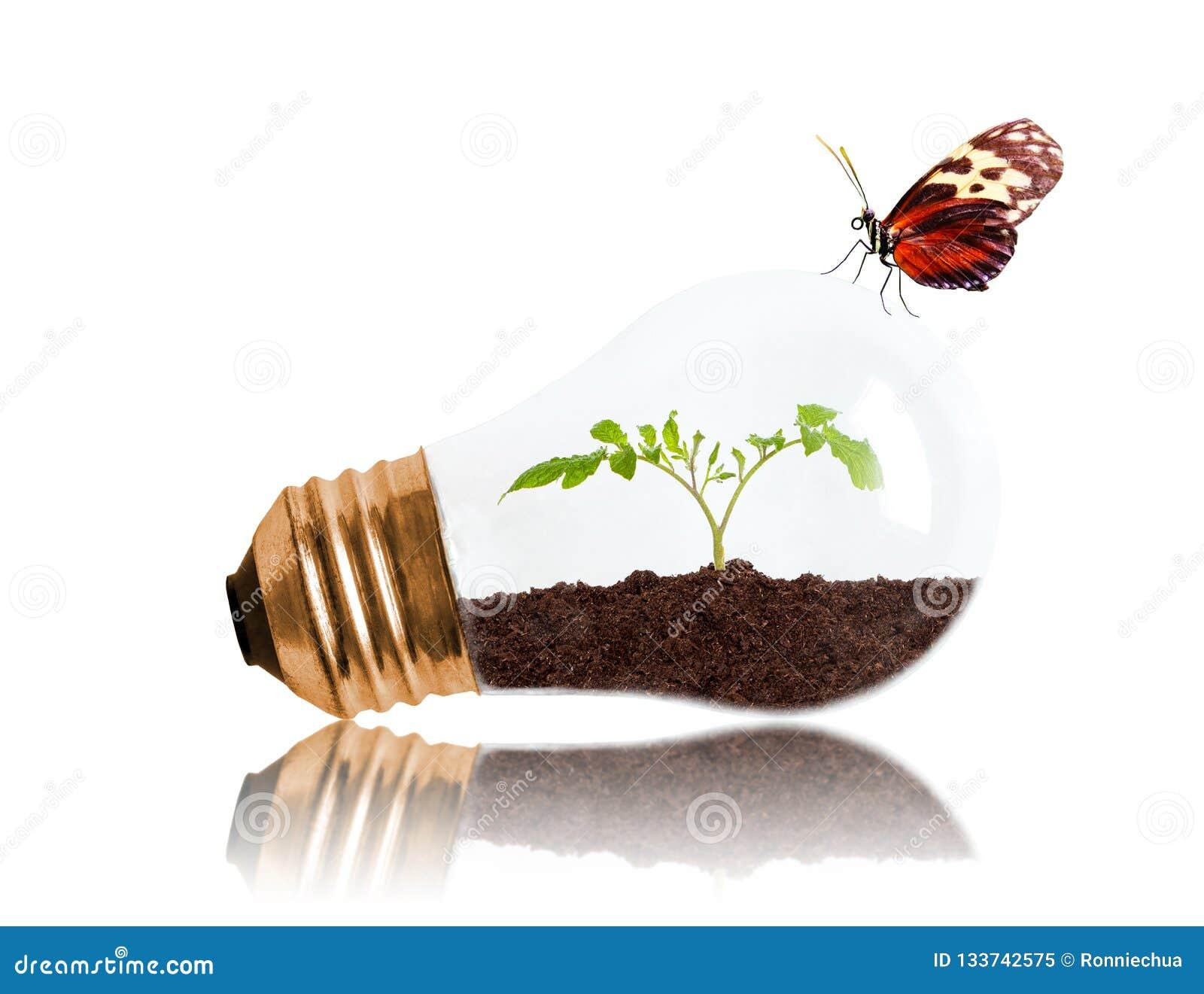 Młody Rozsadowy Rosnąć Z ziemi Wśrodku żarówki Z masłem