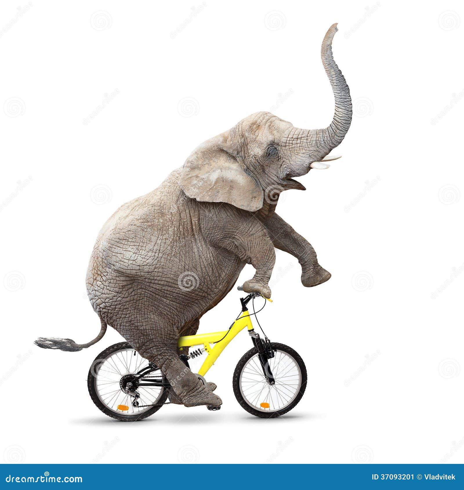 Download Młody słoń zabawę. obraz stock. Obraz złożonej z szczęście - 37093201