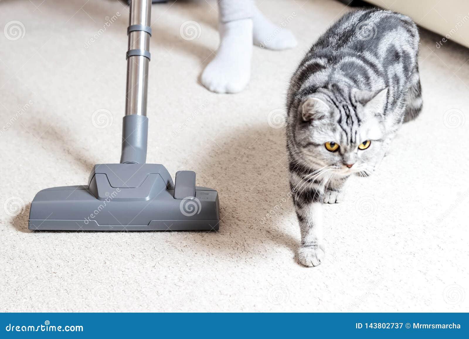 M?dchen, welches das Haus staubsaugt heller Teppich und helles Sofa Reinigungsservice r