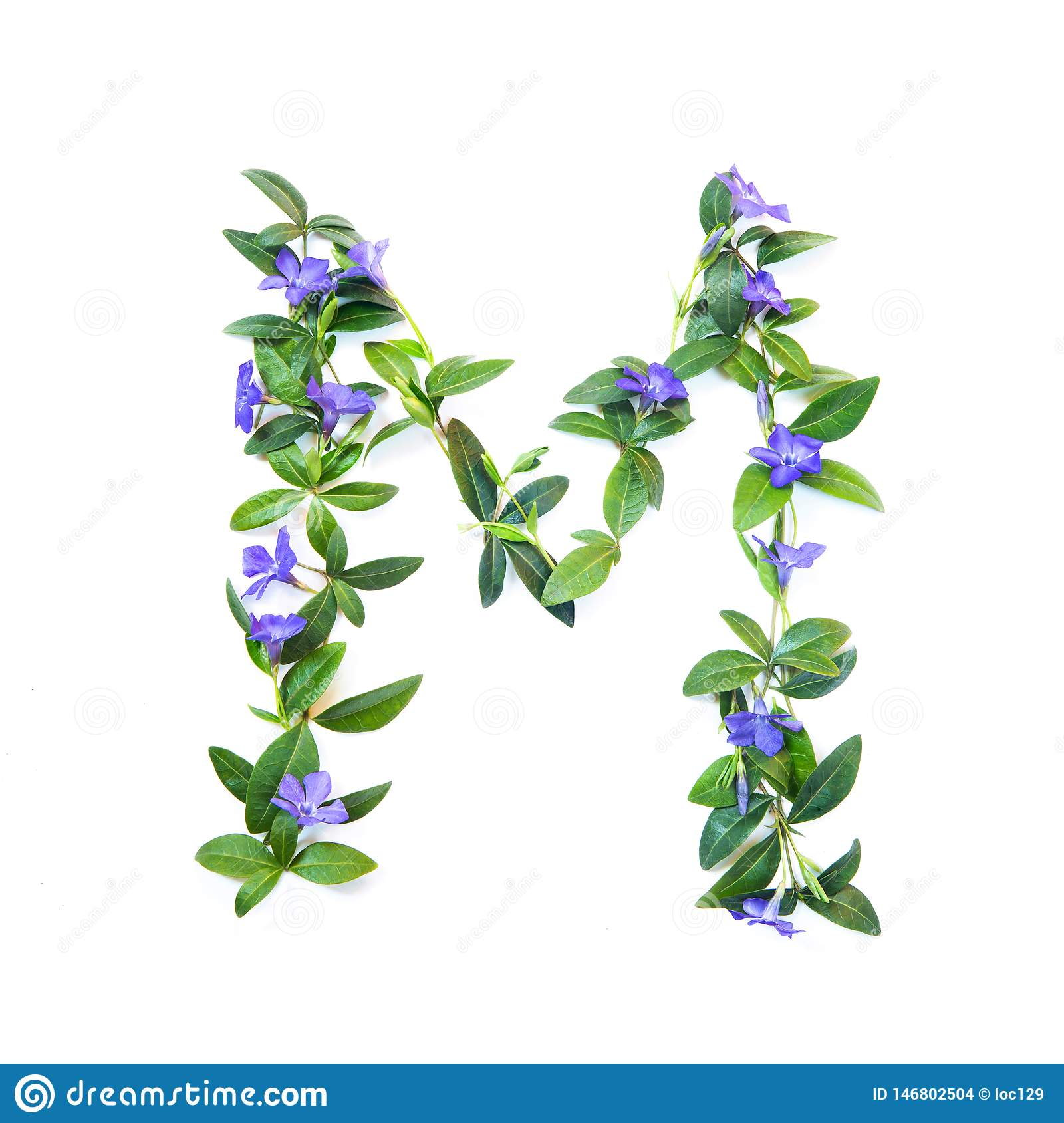 M, letter of the alphabet of flowers isolated on white background. The letter of flowers and leaves of periwinkle