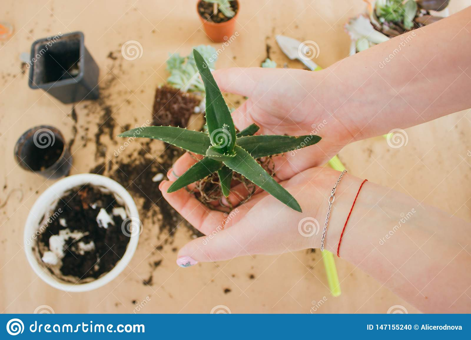 M?os que guardam uma planta verde nova