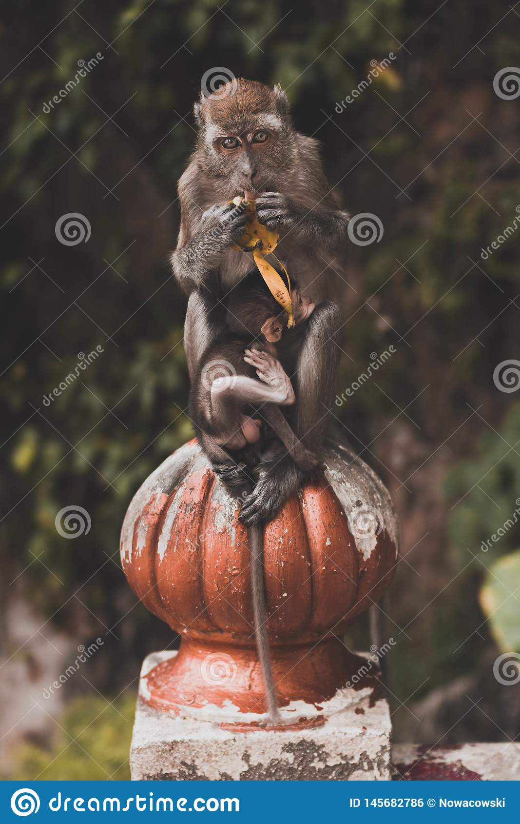 M?re de singe avec la ch?ri