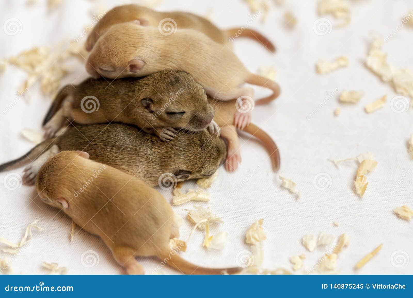 Mały śliczny myszy dzieci spać skupiam się wpólnie Nowy uwolnienie przekonstruowywający dolarowy banknot