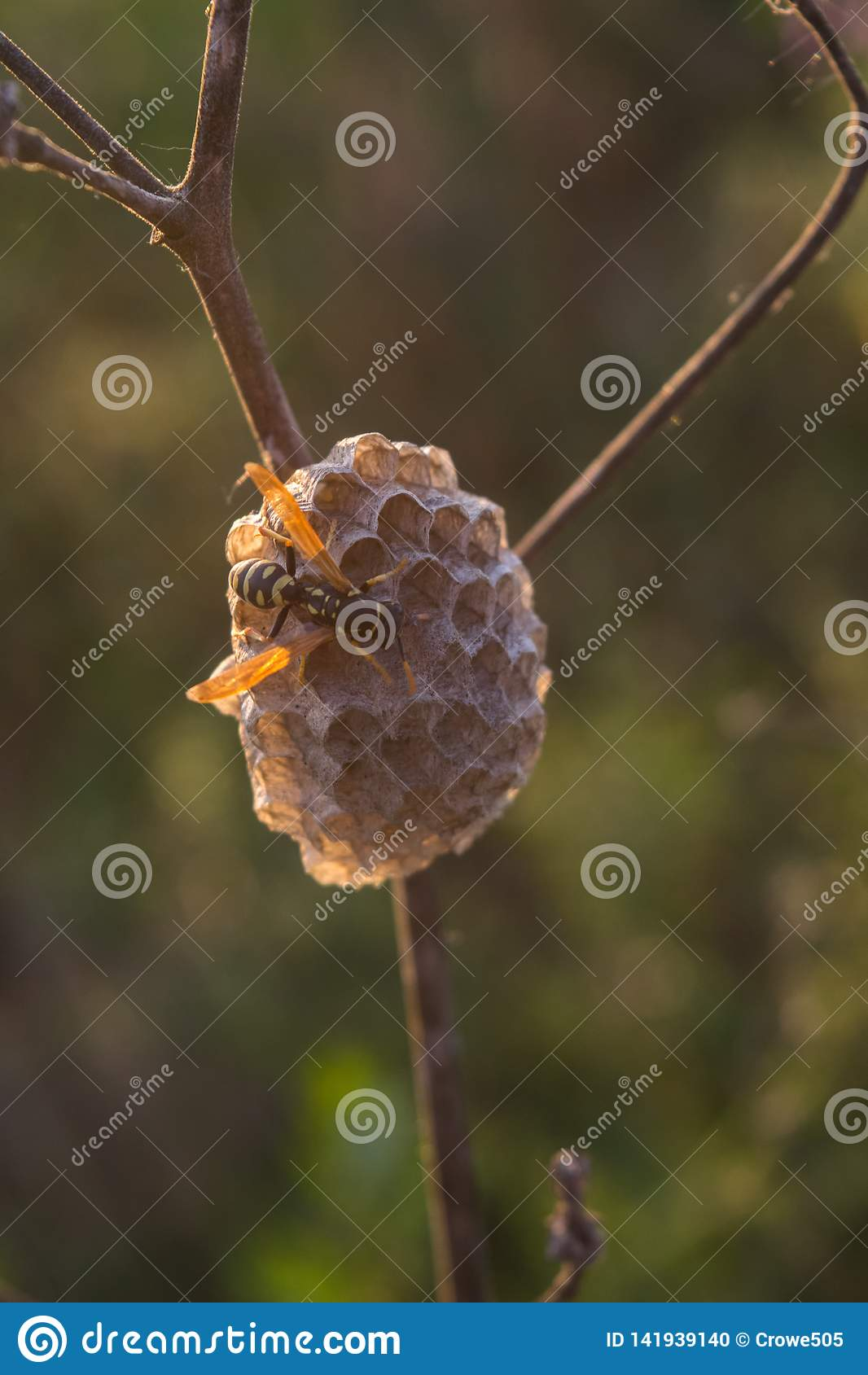 Mały osy gniazdeczko w otwartym polu przy światłem dziennym