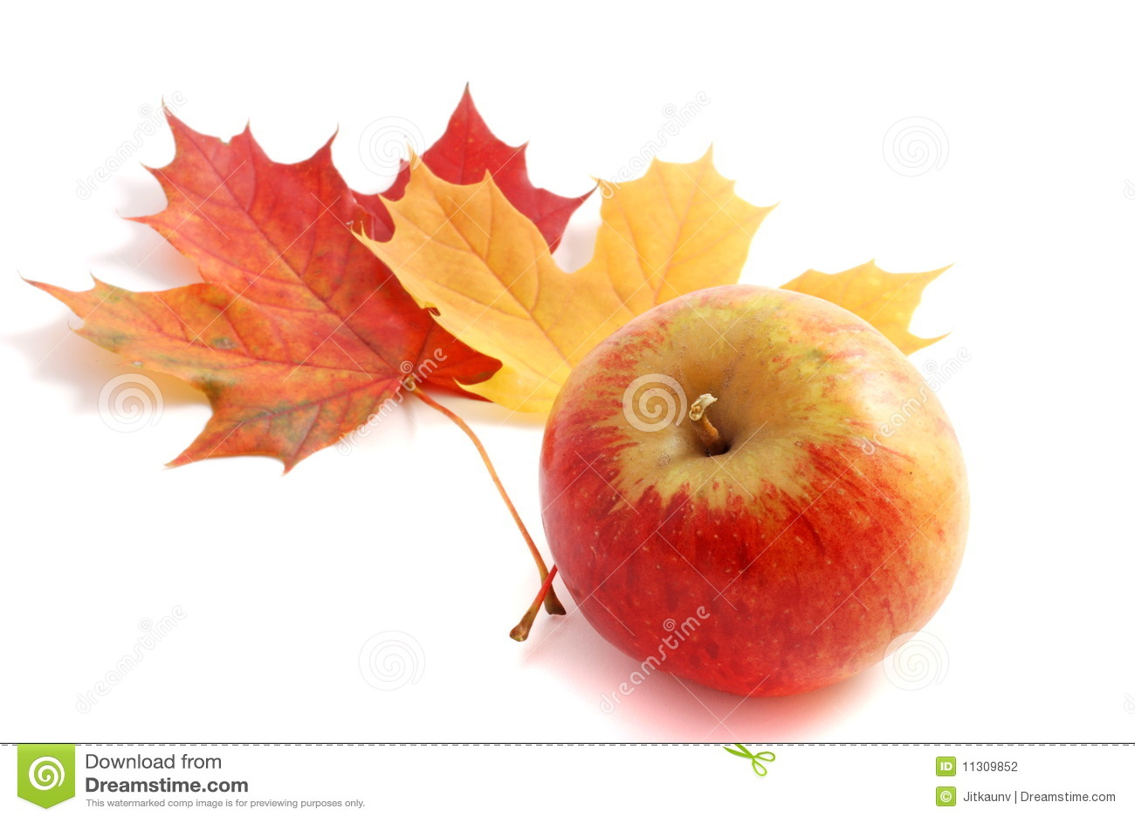 Maçã do outono