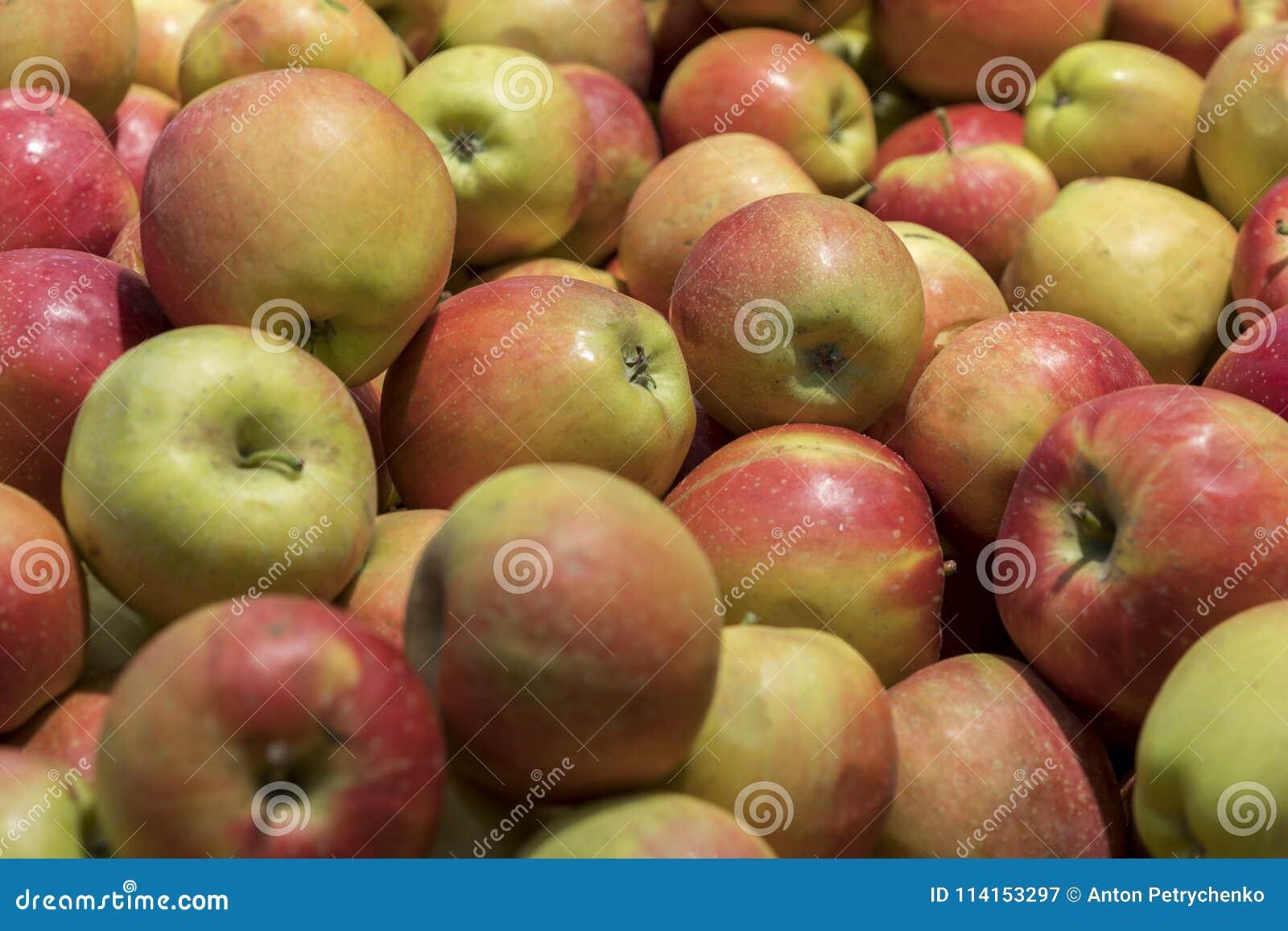 Maçãs vermelhas grandes na loja Muitas maçãs vermelhas na alameda no close up da venda dispararam na imagem natural da cor Alimen