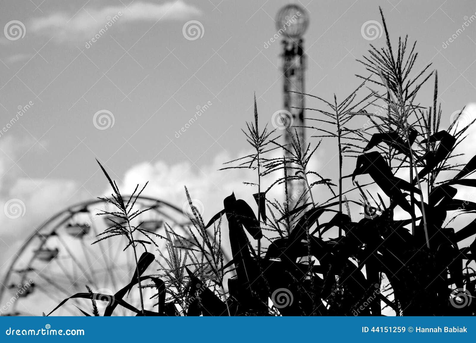 Maíz con Ferris Wheel y la torre del descenso