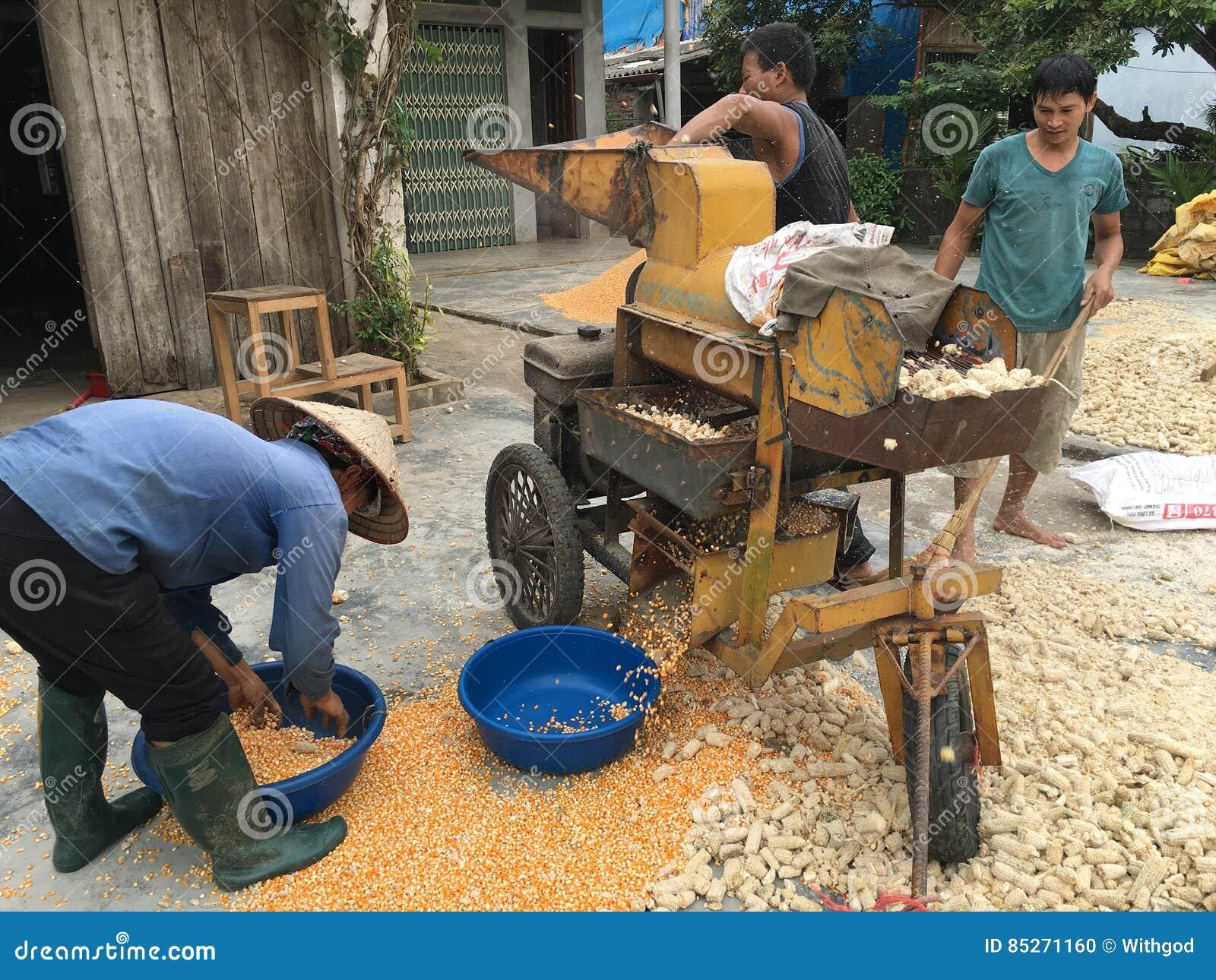 Maíz que descasca en Vietnam