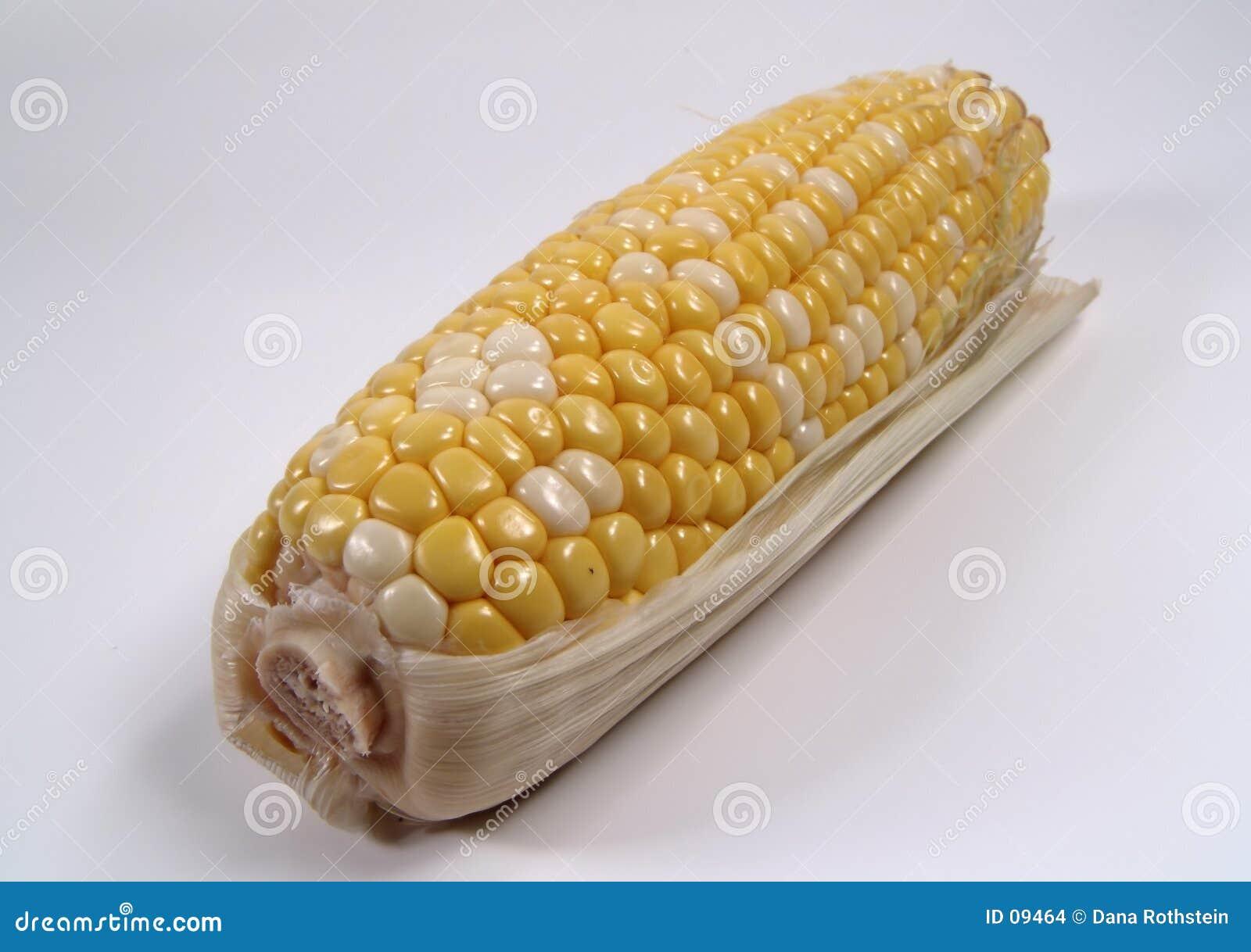 Maïs 2