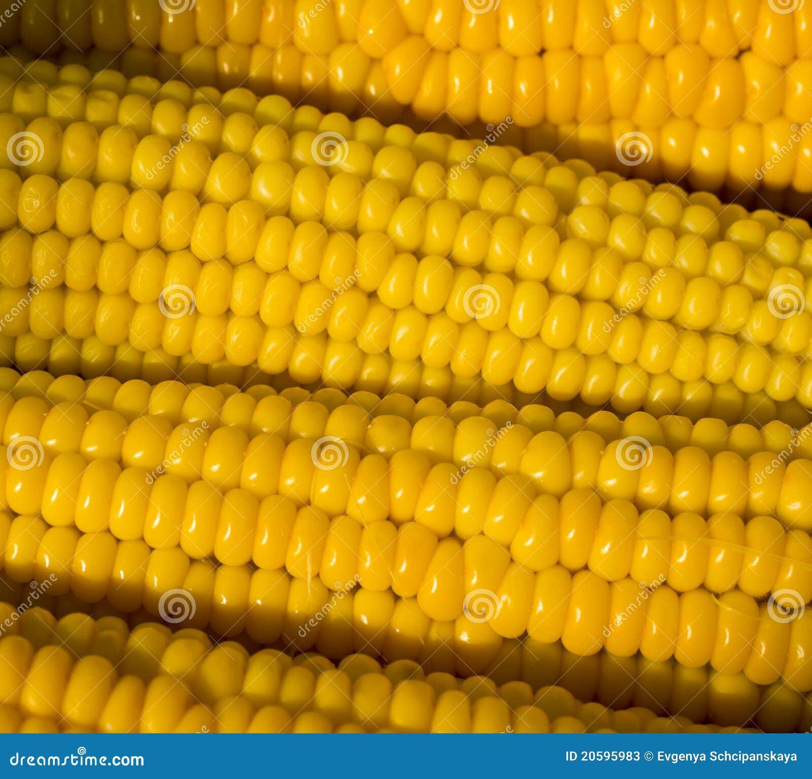 Maïs jaune