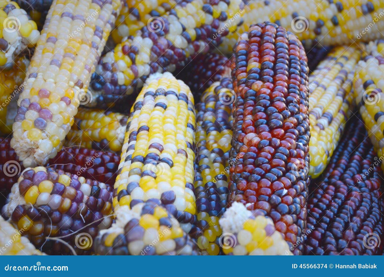 Maïsachtergrond
