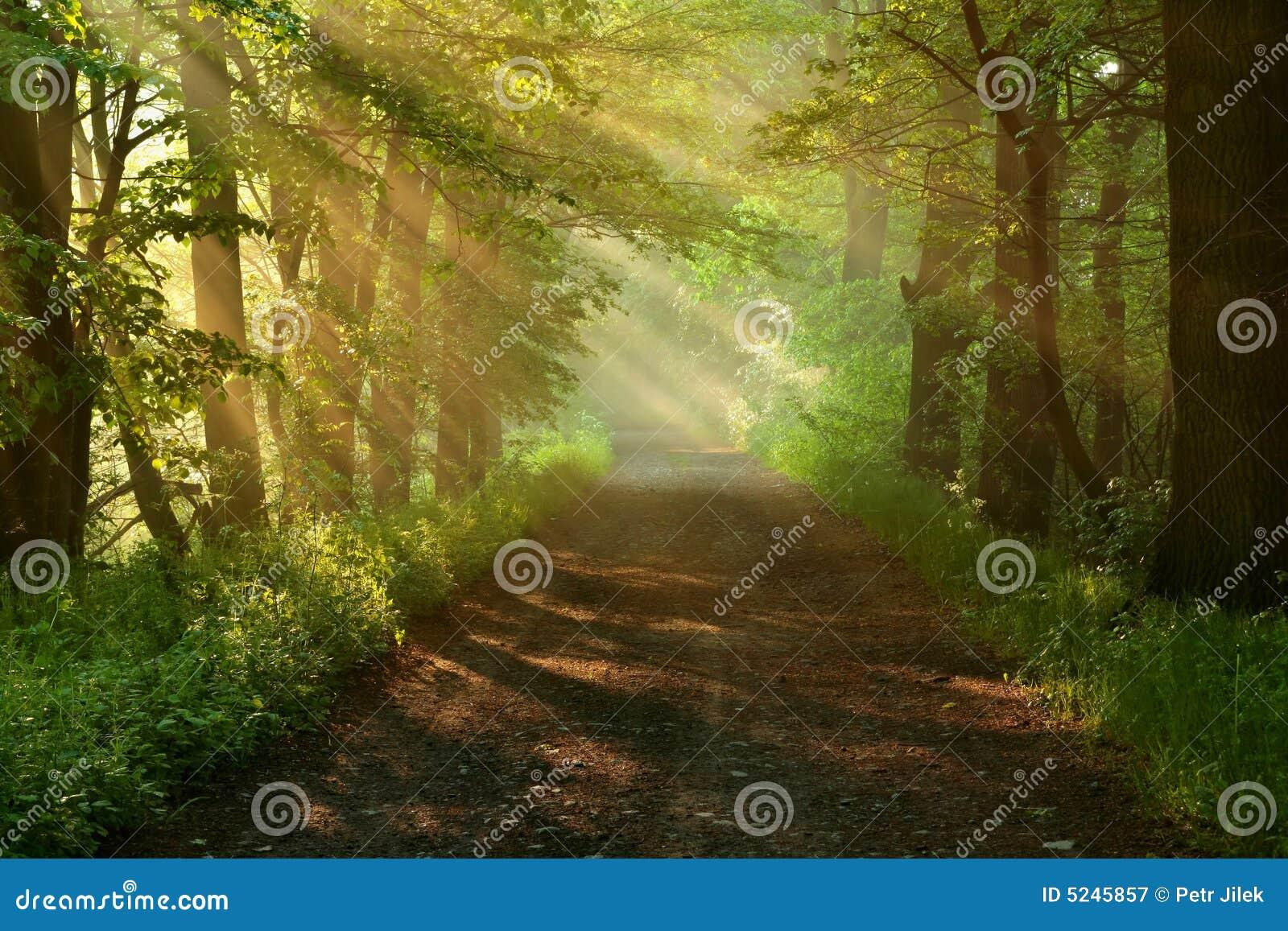 Mañana-camino hermoso del bosque