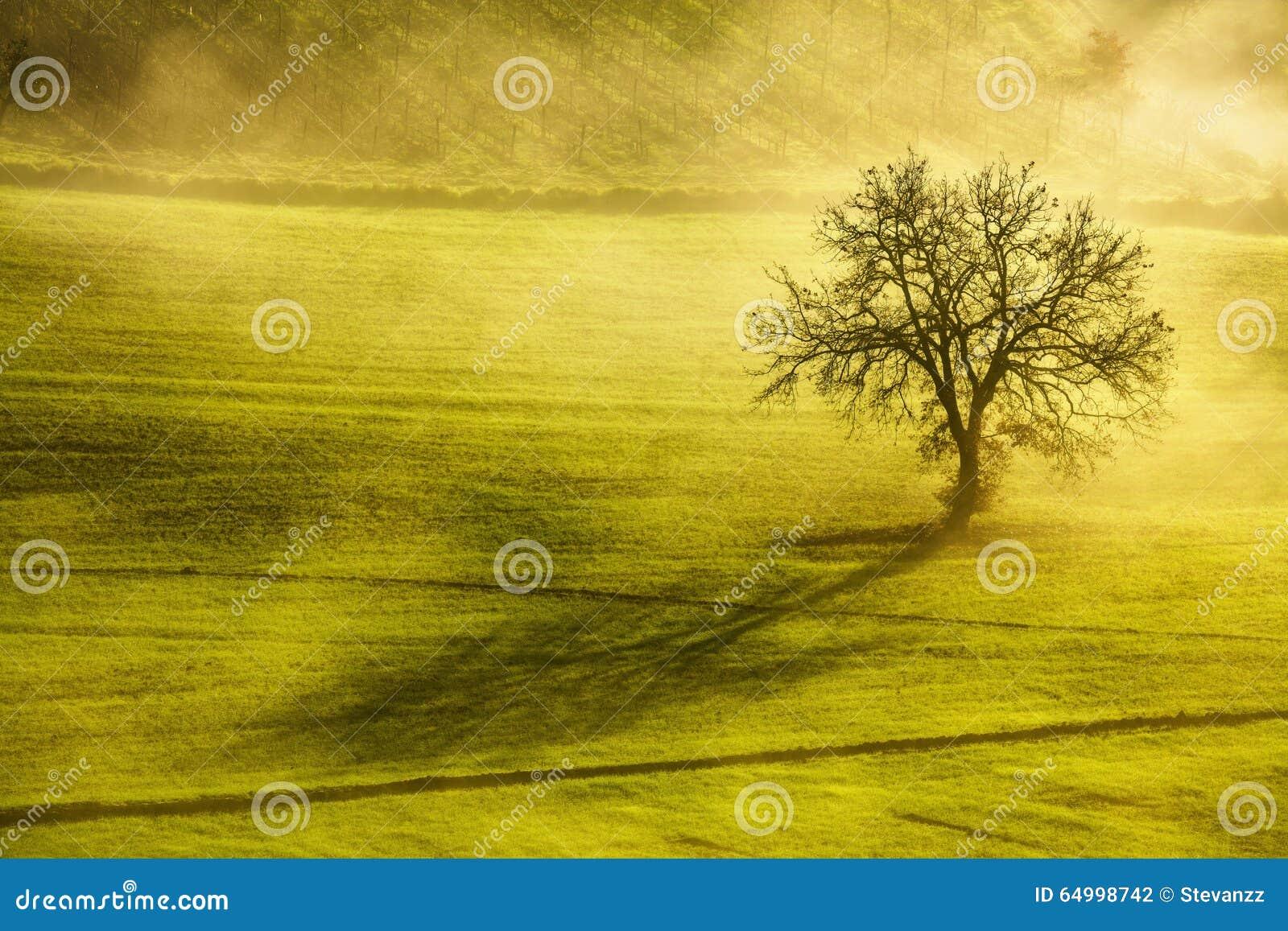 Mañana del invierno de Toscana, árbol solo y niebla Italia
