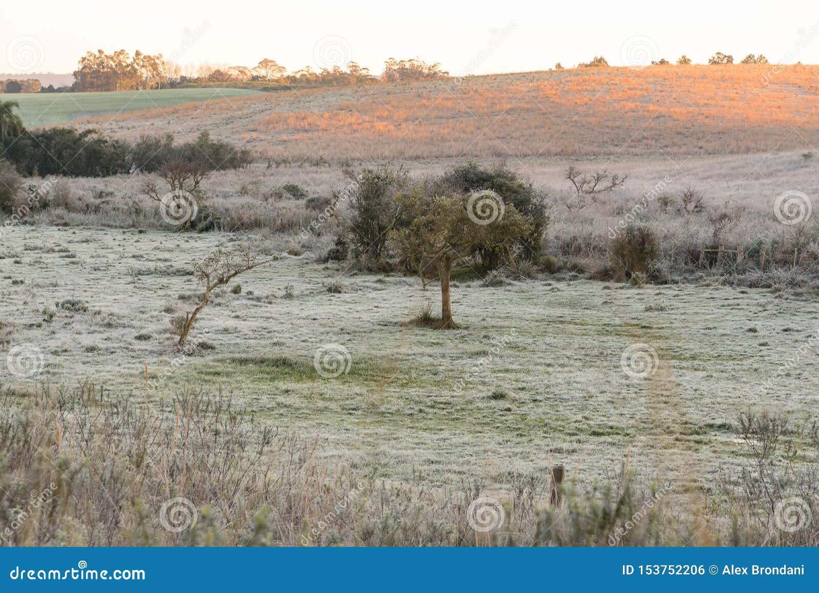 Mañana e hielo del invierno en los campos