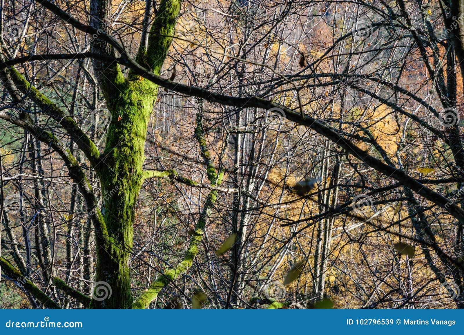 Mañana soleada en el bosque bosque con los troncos de árbol