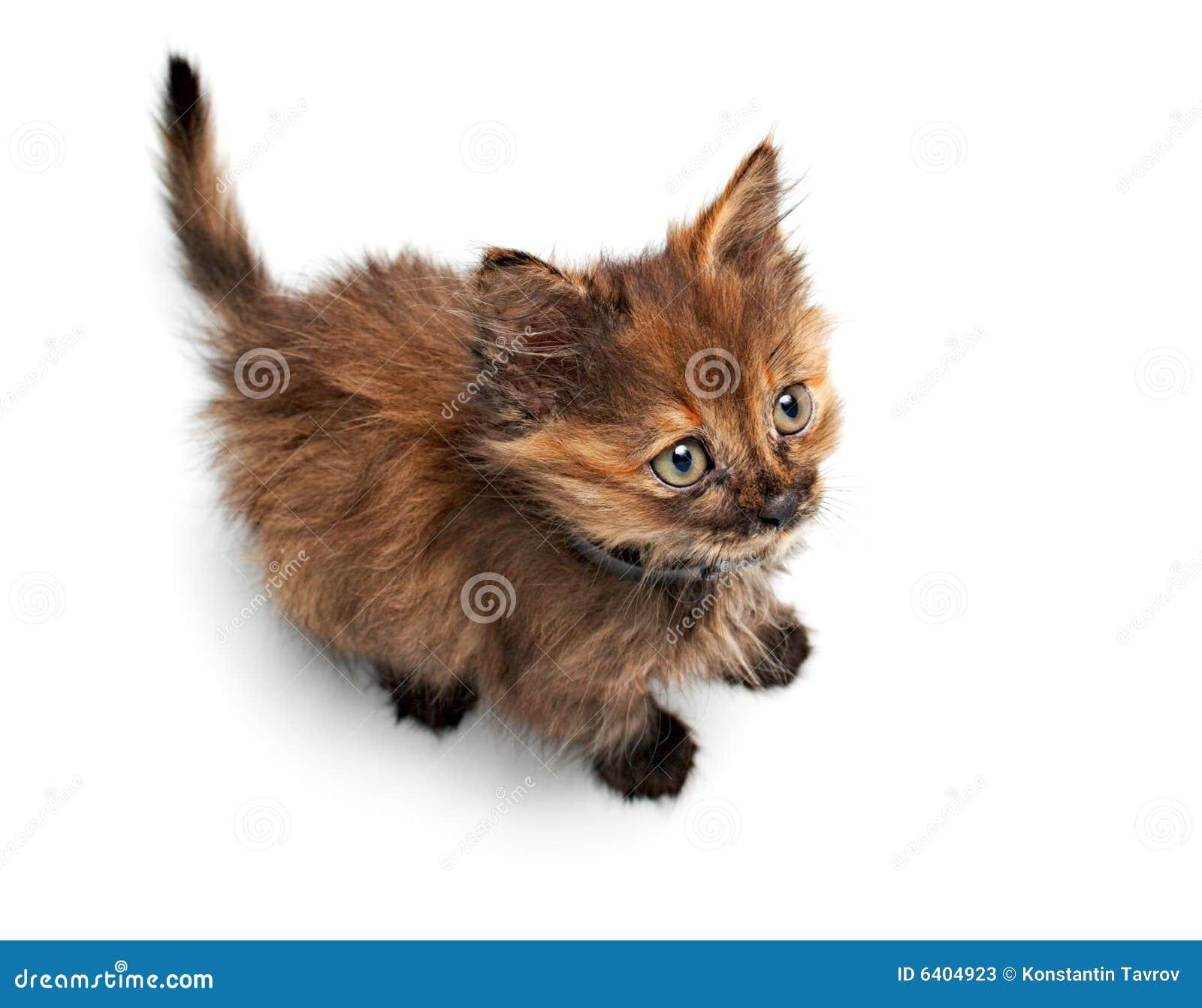 duży kot cipkiVintage nastolatek porno