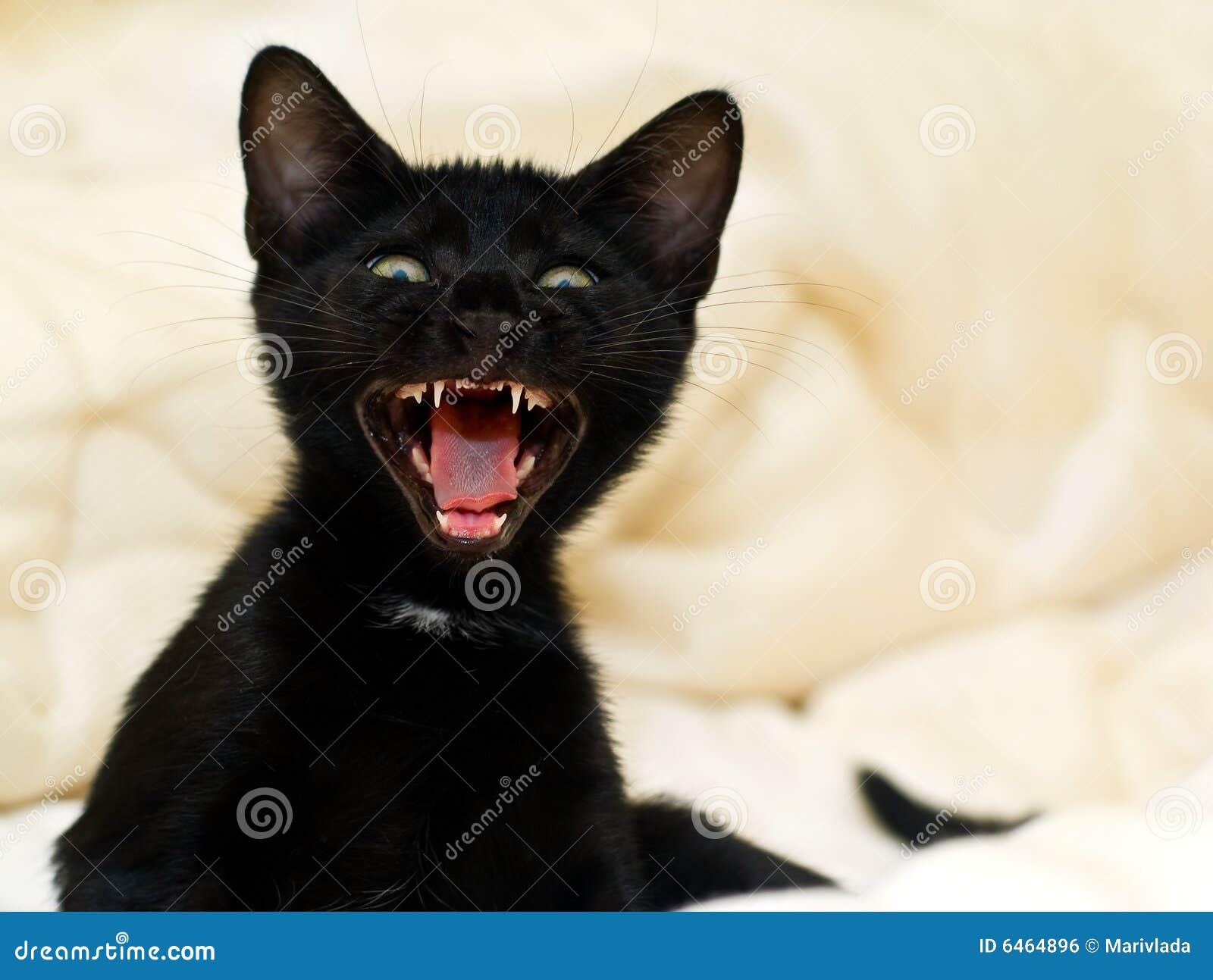 Mała czarna kotku