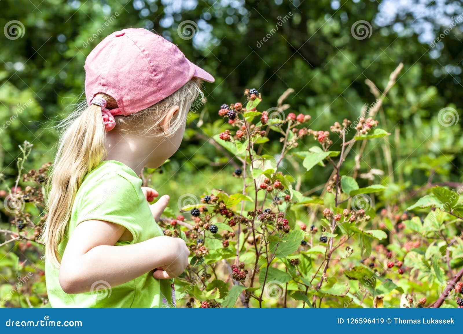 Mała dziewczynka podnosi świeże dzikie malinki w polu w Dani, Europa -
