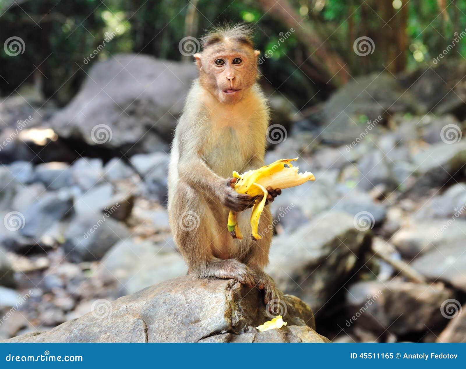 Mała małpa siedzi na kamieniu i je banana