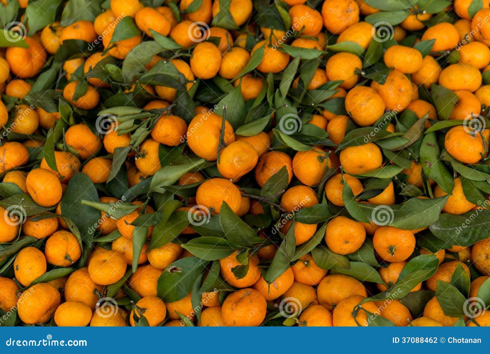 Download Mała pomarańczowa owoc zdjęcie stock. Obraz złożonej z jeden - 37088462