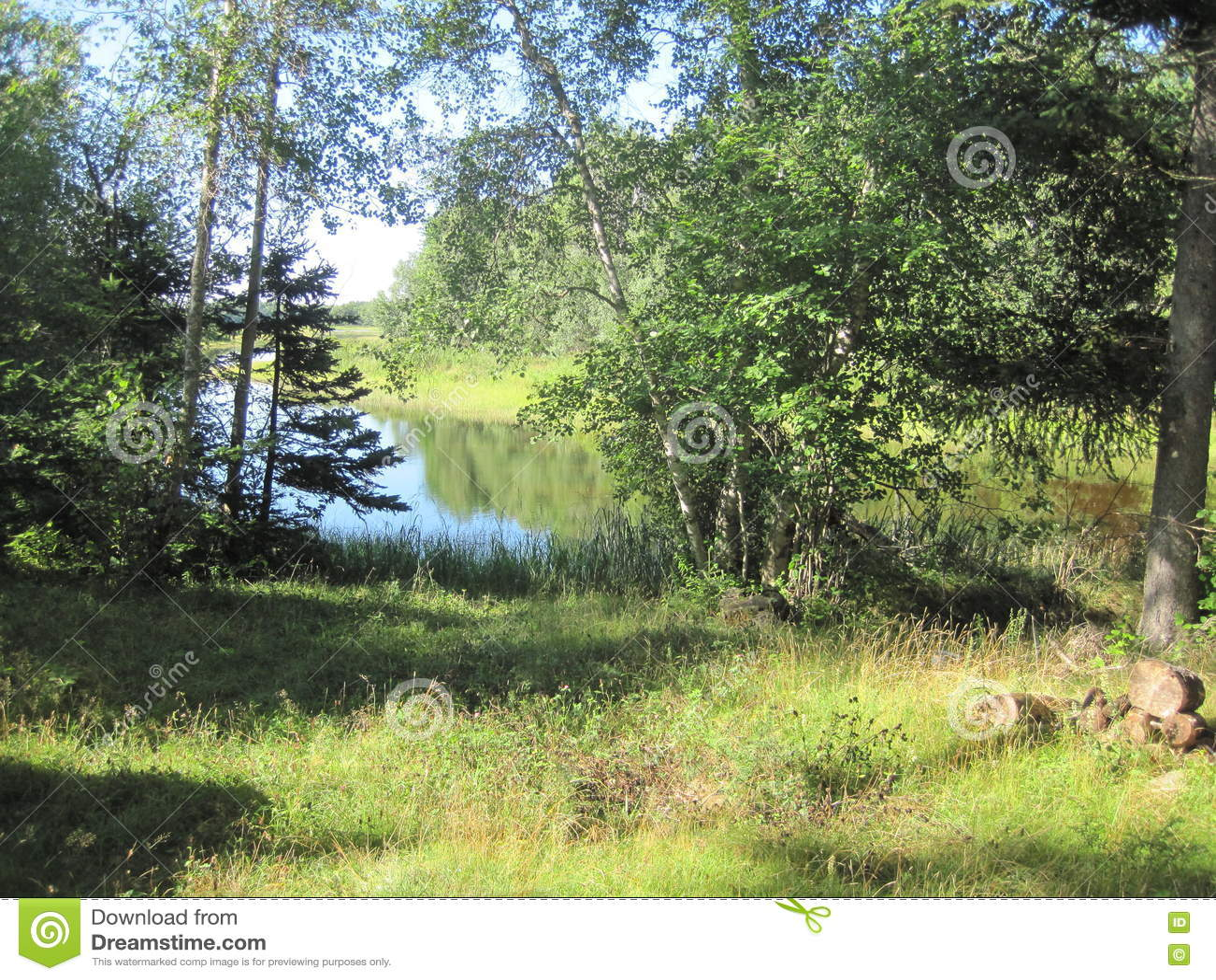 Mała zatoka przez drzew