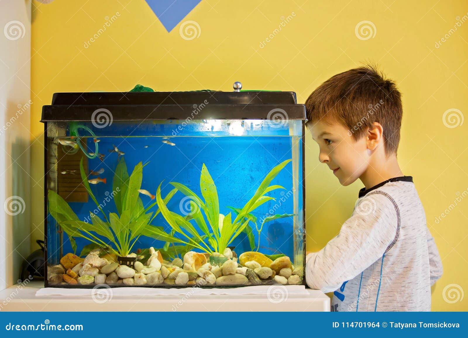 Małe dziecko, studiuje łowi w rybim zbiorniku, akwarium