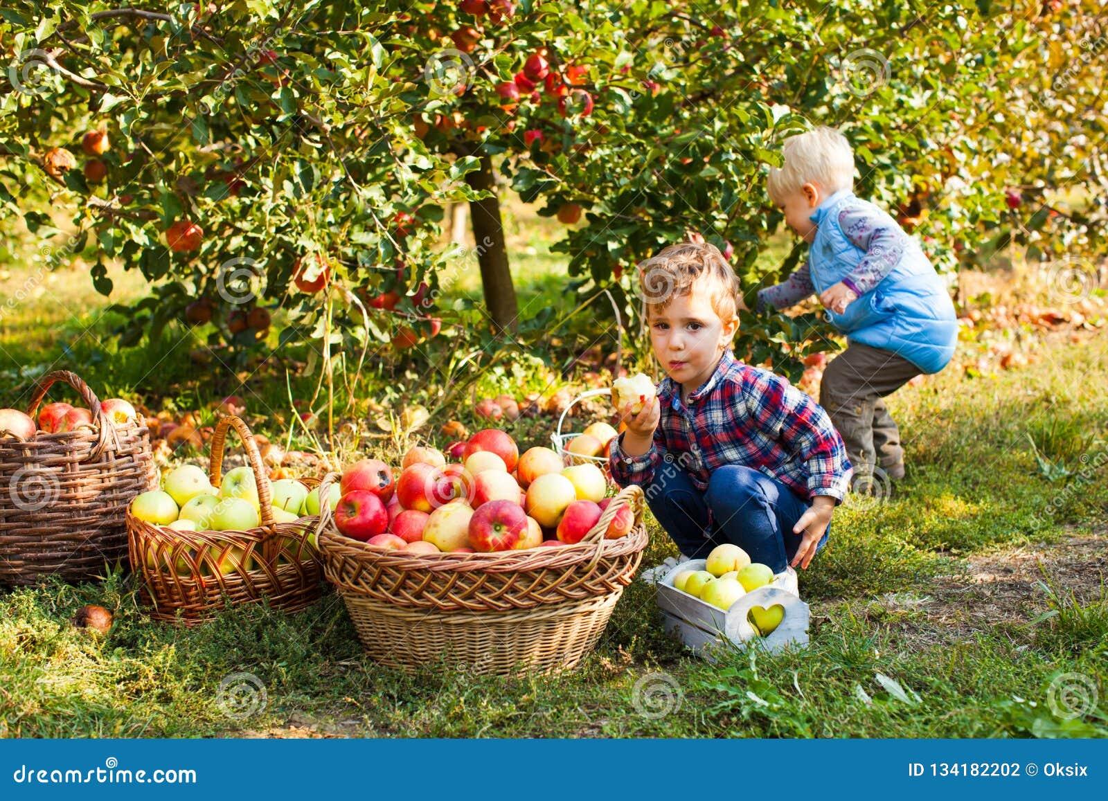 Małej dziewczynki i chłopiec sztuka w jabłoń sadzie