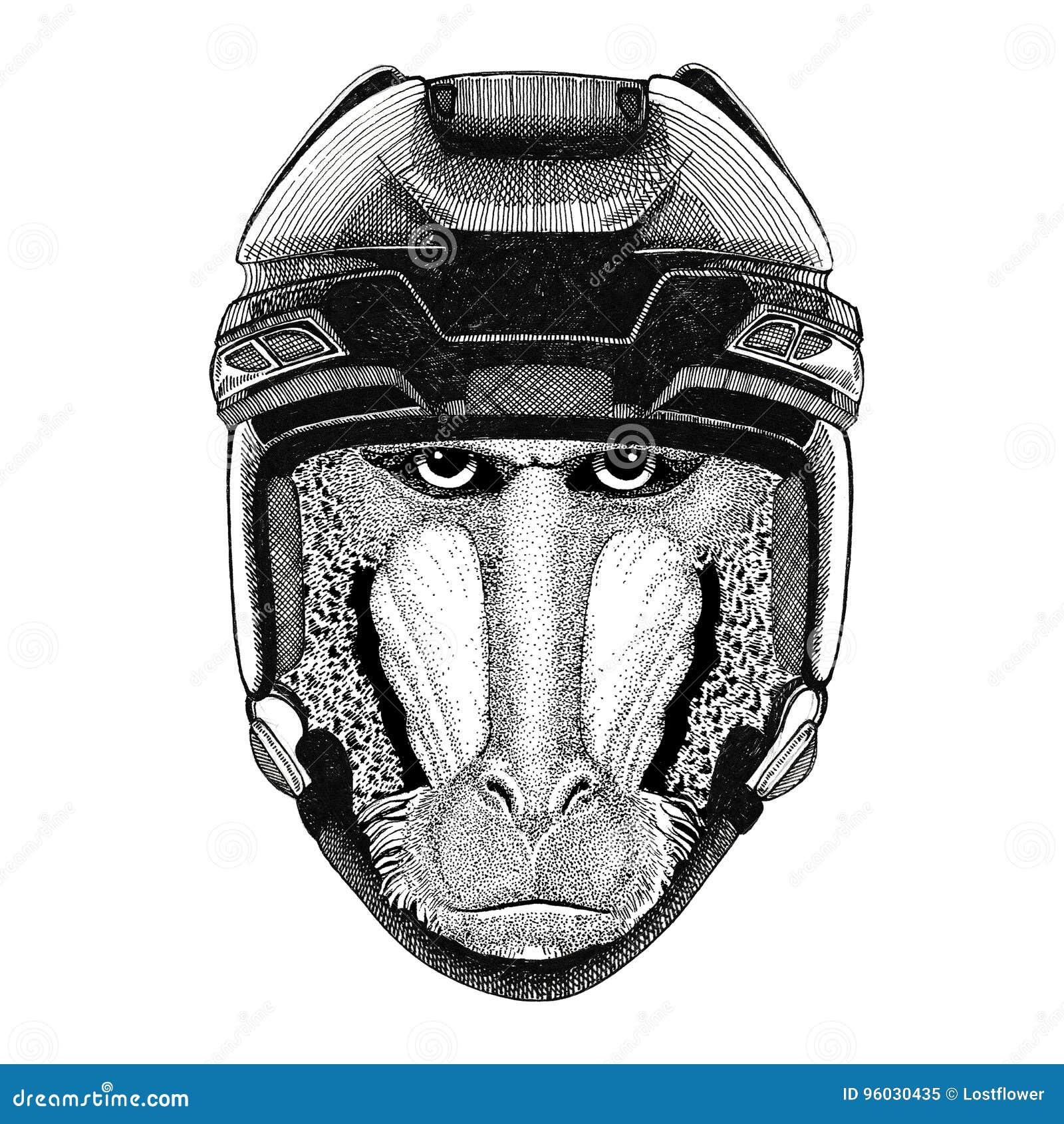 Małpa, pawian, małpa, małpa wizerunku Hokejowy dzikie zwierzę jest ubranym hokejowego hełma sporta zimy sporta zwierzęcego Hokejo