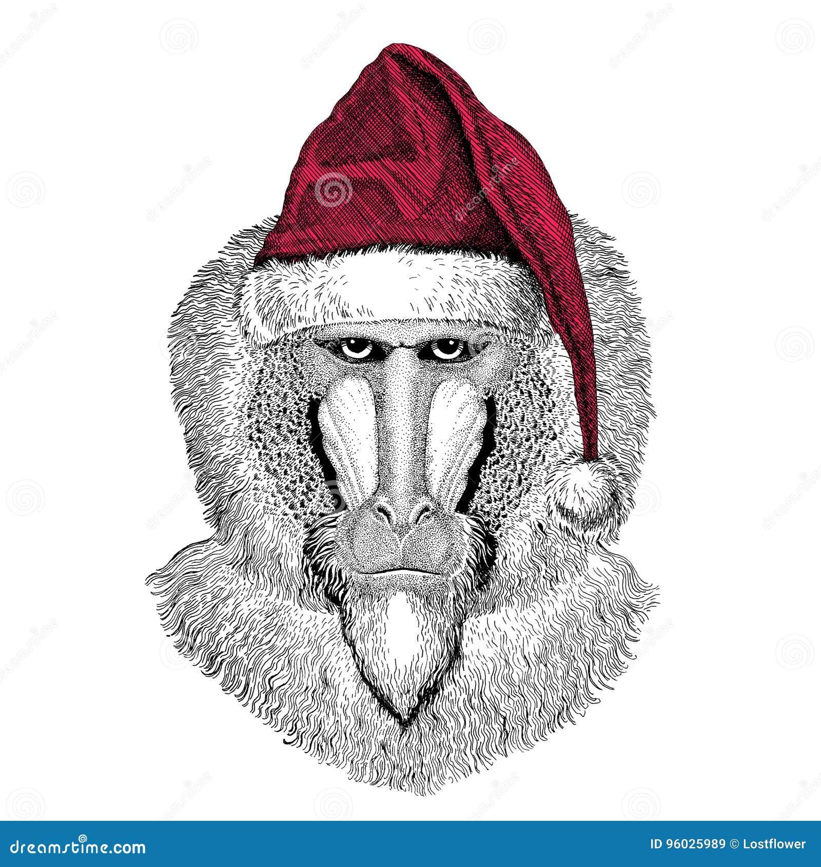 Małpa, pawian, małpa, małpy Bożenarodzeniowy ilustracyjny dzikie zwierzę jest ubranym bożego narodzenia Santa Claus zimy kapelusz